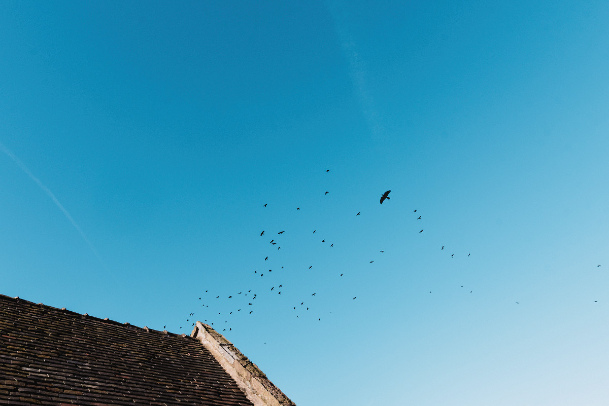birds fly over the Ashes Barn